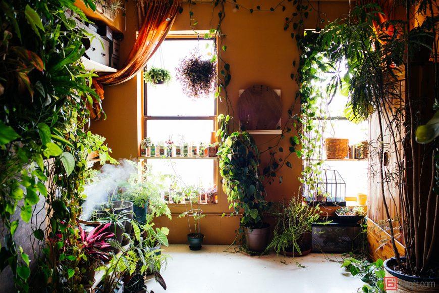 Adding Plants to your Boston Apartment